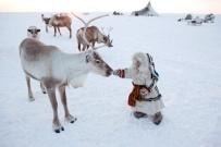 Nenya Vanuito, niña Nenet de 2 años, se acerca a un reno en el acampamento de invierno