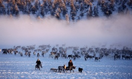 Pastores con sus renos en invierno cerca de Verkhoyansk.