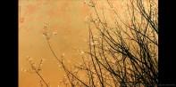 Crepe-Myrtle-II-gold-leaf-painting-greg-dunn