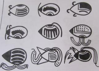Pallares germinado - Ideogramas Nasca (Perú)