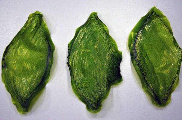 Silk-Leaf-b2