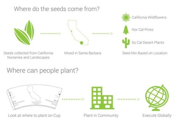 taza-de-cafe-biodegradable-tipos-de-semillas